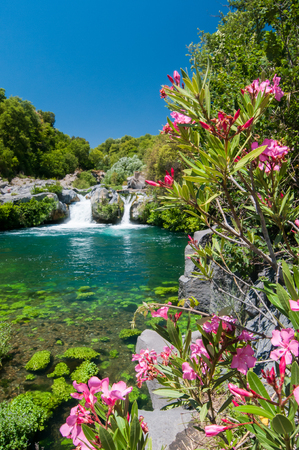 Oleander plant, a natural pool and a fall of the Alcantara river park, Sicily