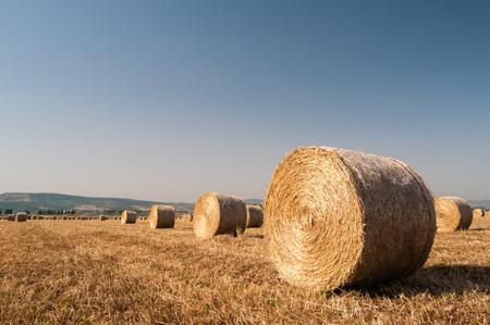 catania: Cylindrical sheaves of corn in the plain of Catania, Sicily Stock Photo