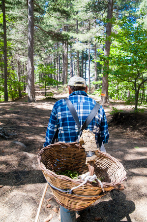 picker: A mushroom picker walking along a path of Mount Etna natural park with a big wicker basket on his back Stock Photo
