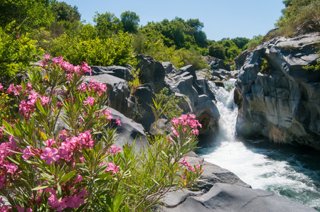 locality: Oleander plant and a fall in the Alcantara river park, Sicily