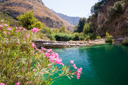 Flowered oleander plant in the natural reserve Cavagrande, Sicily, and one of its natural pools in the background Stock Photo