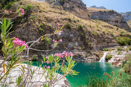 Oleander plant in the natural reserve Cavagrande, Sicily, with a view of its natural pools and canyons of the