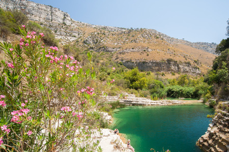 Oleander plant in the natural reserve Cavagrande, Sicily, with a view of its natural pools and of the canyon