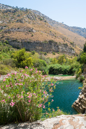 locality: Oleander plant in the natural reserve Cavagrande, Sicily, with a view of its natural pools and of the canyon