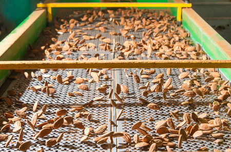 The process of almond selection and calibration in a carriage of a modern factory Stock Photo