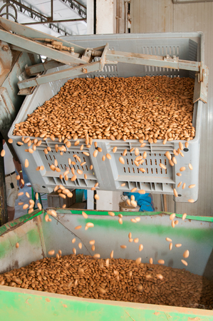 big bin: A bin forklift pouring down almonds in a big metal funnel before the industrial working process