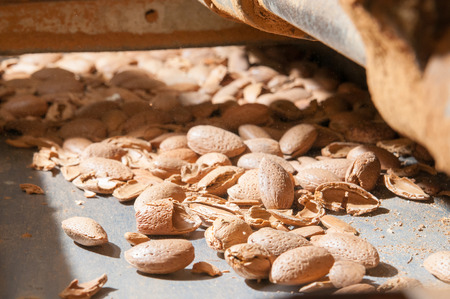Almonds in the lift for the cracking process