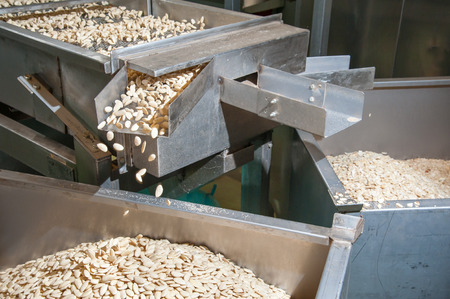 Shelled almonds in the carriage for the peeling process in a modern factory Фото со стока