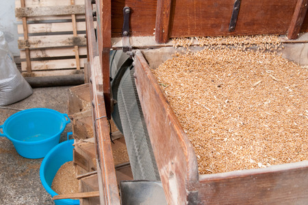 vetch: Rustic wooden grain separator at work while separating the vetch from the seed Stock Photo