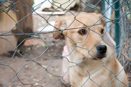 corral: Stray dog ??behind the corral of a dog refuge