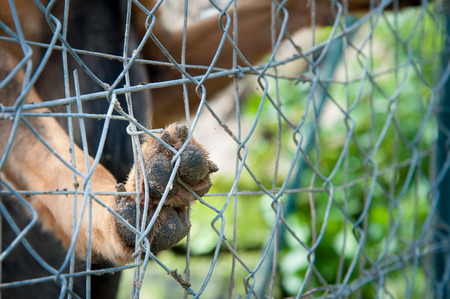 Close-up view of a dog paw lent to the net of a corral in a dog refuge