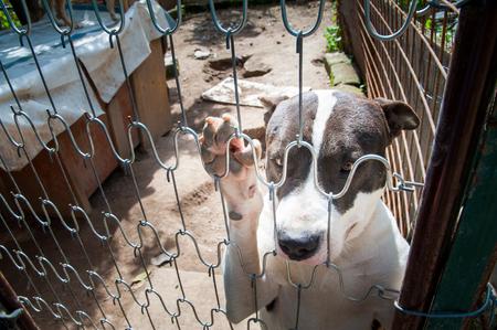 penned: Inside a dog refuge