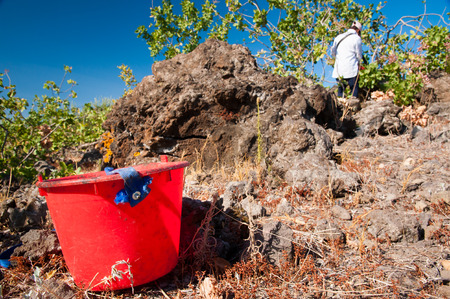 grooves: Red pail on the ground during pistachio harvest time in Bronte, Sicily Stock Photo