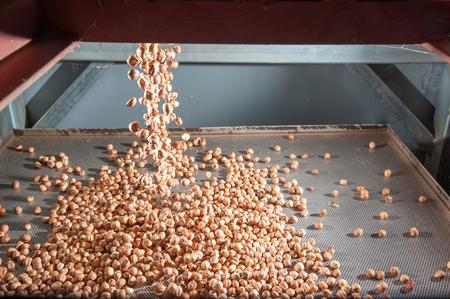 Gewone shell hazelnoten vallen op een metalen lade klaar voor het peelproces