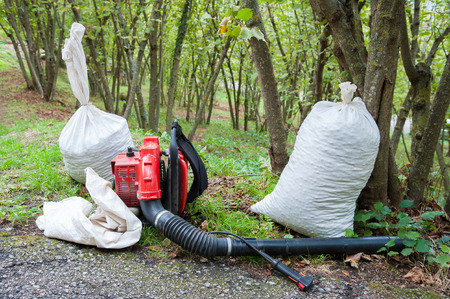 typical: White sacks full of just picked hazelnuts in a grove during harvest season Stock Photo