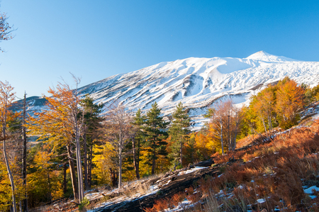 Perspective of northern side of Mount Etna, Sicily, and of a pine and beech wood in autumn 스톡 콘텐츠