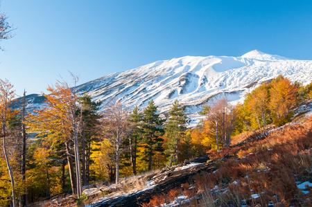 시칠리아 산 에트나 (Etna) 산의 북쪽과 가을의 소나무 및 너도밤 나무의 전망 스톡 콘텐츠