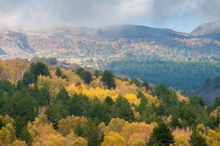 Perspective of northern side of Mount Etna, Sicily, and of a pine and beech wood in autumn Stock Photo
