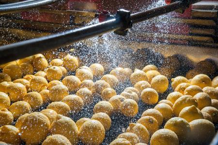 Cajas llenas de limones recién cosechados en un huerto de cítricos cerca de Siracusa, Sicilia Foto de archivo