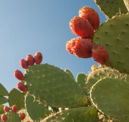 Prickly pears and some mustard shapes on a table Stock fotó