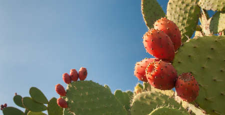 Prickly pears and some mustard shapes on a table