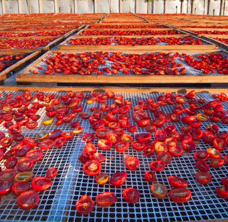 Sun-dried tomatoes 版權商用圖片