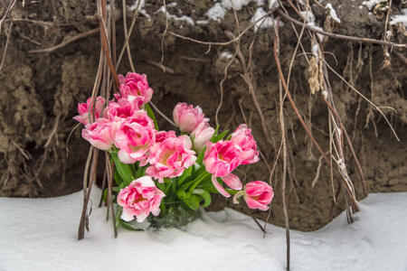 lost love: Fresh flowers in a vase standing in the snow on a grunge background
