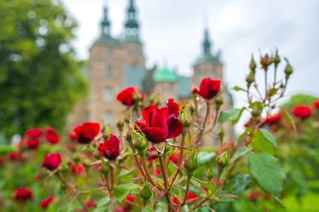 Roses blooming in the gardens of Rosenborg Castle in Copenhagen, Denmark. Red roses in Rosenhaven garden in front of Rosenborg Castle.