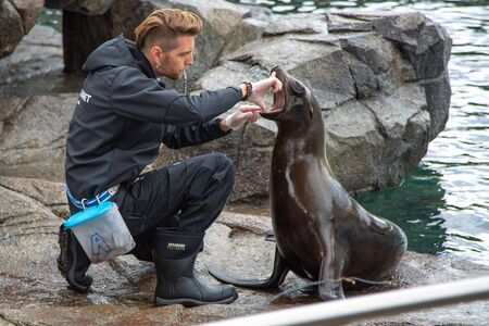 Bergen, Norway - Jule, 2016: Seal with a trainer in the zoo. The trainer looks into the mouth of a fur seal. 에디토리얼