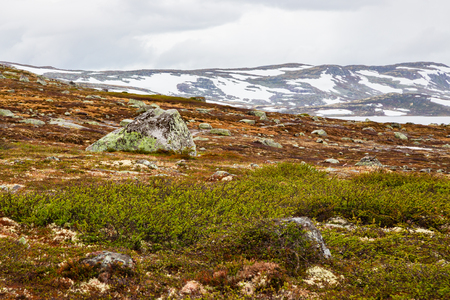 Norway landscapes. Beautiful mountainous landscape around Norwegian fjord in sunny day. Beautiful Nature Norway natural landscape. Norwegian climate. Stones boulders covered with moss.