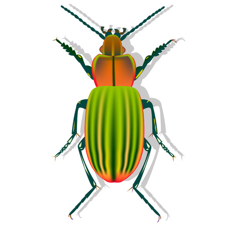 ground beetle with shadow on white background, earth beetle, gradient pattern of beetle