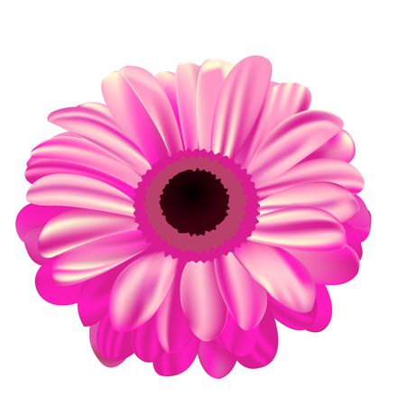 Pink gerbera on white background, flower with gradient fill, mesh gradient, beautiful flower Ilustrace