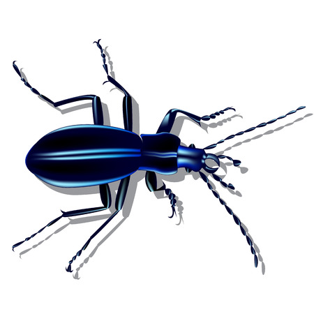 Blue earth beetle with shadow on a piece of paper Illustration