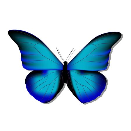 Blue butterfly morph on white background with shadow