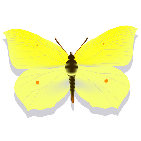 yellow butterfly lemon grass on white background with shadow, gradient, 3d