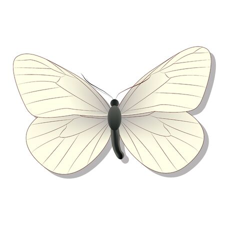 white butterfly on white background with shadow, gradient, 3d  Illustration