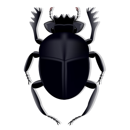 Scarab beetle created using a mesh gradient on a white background with shadow