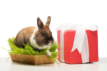 Cute little bunny sitting in grass near present box with white ribbon. Concept for holidays