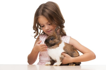 aucasian: Beautiful little girl feeding cute brown bunny, isolated on white background Stock Photo
