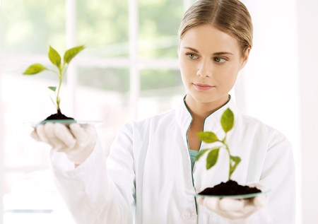 Beautiful young biologist experimenting in laboratory. Woman studying two green sprouts