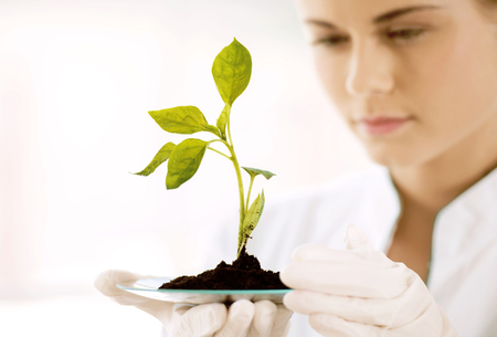 Beautiful young biologist experimenting in laboratory. Woman studying green sprout. Close up of sprout