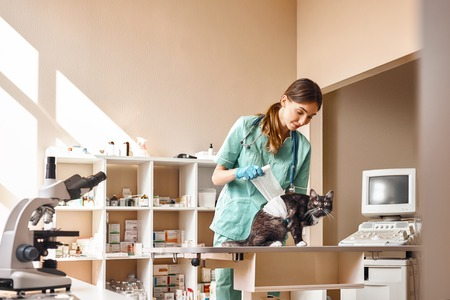 Everything will be fine! Young female vet bandaging a paw of a big black cat lying on the table in veterinary clinic. Pet care concept