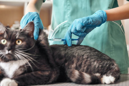 Do not be afraid! A young female veterinarian in a work uniform is going to make an injection to a big black cat with frightened eye lying on the table at the veterinary clinic