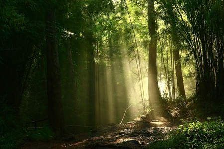 Light through the forest photo