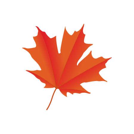 maple leaf graphic design vector