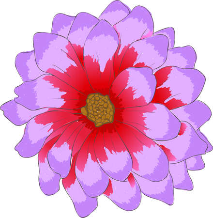 Dahlai is a genus of bushy, tuberous, herbaceous perennial plants native to Mexico and Central America. Ilustrace