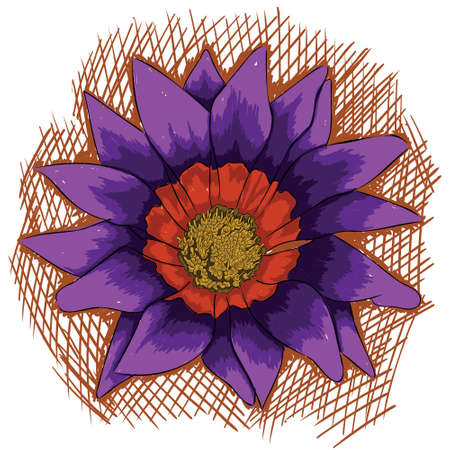 Have you ever seen the african daisies ?