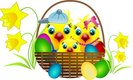 Chickens family in basket with easter eggs and daffodil photo