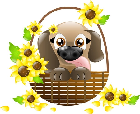 Cute brown puppy in basket with sunflowers on white background photo