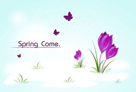crocus: Spring background with crocus illustrations